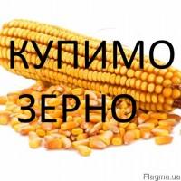 Компанія закупляє кукурудзу в Закарпатській, Чернівецькій та Івано-Франківській областях
