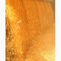 Кукуруза на условиях FCA
