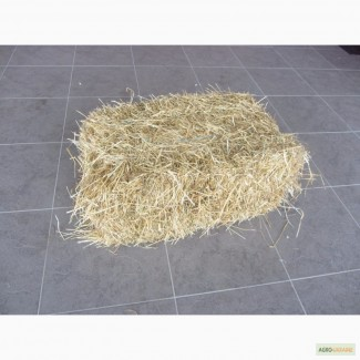 ТОВ Агровесна-Маркет продає солому в тюках