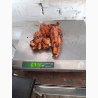 Морковь на корма