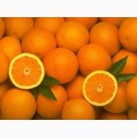 Апельсины. Продажа цитрусовых оптом в Запорожье