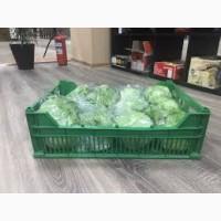Продам оптом салат лола бионда айсберг стебель