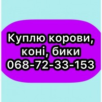 Закуп. ВРХ (Бар, Хмільник, Жмеринка, Літин, Тиврів)