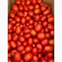 Продам помидор с поля