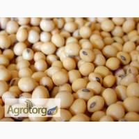 Семена сои Максус CHU 2600, 1 репродукция, (устойчивая к гербицидам)