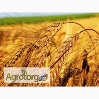 Закупаем пшеницу по всем Регионам