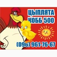 Супер Цыплята бройлер КОББ-500