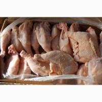 Продаем четверти куриные Агро-Овен