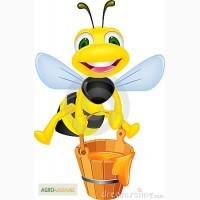 Куплю мёд оптом, самовывоз