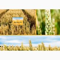 Семена озимой пшеницы Донецкая 48 Суперэлита, урожайность 79-94 ц/га