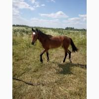 Продам коня ( лошицю)