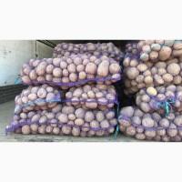 Продам картофель (картошку) Беларусь, Турция