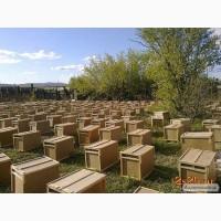 КАРНІКА! Приймаємо заказ на бджолопакети породи Карніка