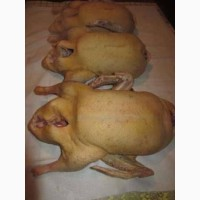 Продам мясо. Индейка, индюк, курица, утка, гусь, тапак, перепела