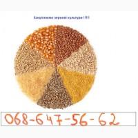 Купимо кукурудзу, пшеницю, сою, тритікал, відходи пшениці та кукурудзи