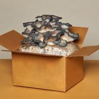 Грибная грядка, грибная коробка, грибная мини ферма, грибы на кухне