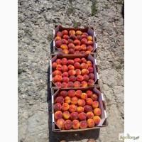 Продам персик абрикос