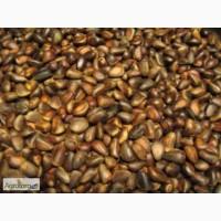 Продаем кедровый орех в шкарлупе и без