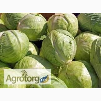 Продам капусту 2 сорта для производства оптом