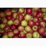 Продам яблоки опт