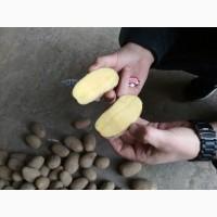 Закупаю картофель в больших обьемах
