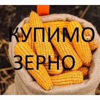Закуповуємо на постійній основі Кукурудзу по Закарпатській області волога некласна і т.д