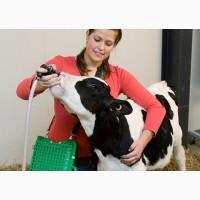 Сухое молоко заменитель цельного молока Лактивит