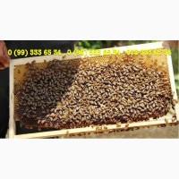 Пчелопакет, бджолопакет 4-рамки, карпатка 2019 Доставка Днепр, Запорожье, Полтава, Харьков