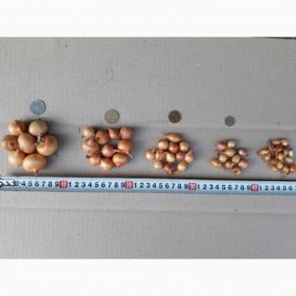 Продам лук севок ( тыканка) сорт Штутгарт. Вcе фракции размеров. При объеме цена договорн