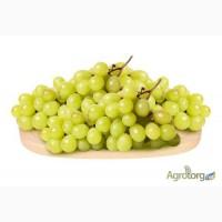 Продаем виноград Кишмиш