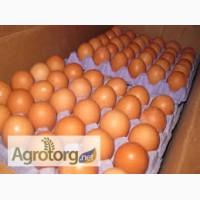 Миражное яйцо от инкубации