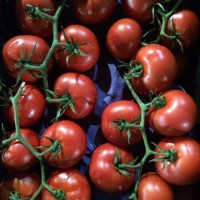 Продаем томат