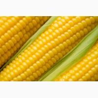 Организация закупает кукурузу. Вся Украина