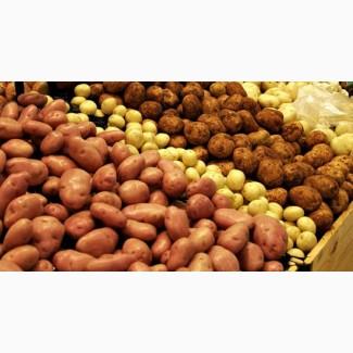Продам картофель разных сортов, возможна доставка