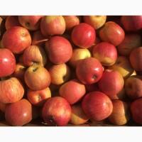 Продам яблука: Фуджі