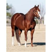 Продам конину оптом дешево - полутуша, блочка