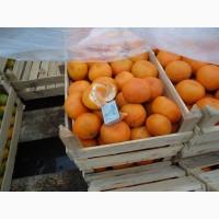 Продам мандарины грузинские турецкие