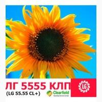 Семена подсолнечника ЛГ 5555 КЛП Cruiser