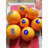 Апельсин Египет высший сорт в НАЛИЧИИ