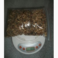 Календула насіння/семена календулы