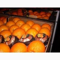 Продам мандарины сорт Испания