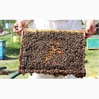 Продам Пчелопакеты карпатка на весну 2019 с Доставкой, Запорожье, Днепр