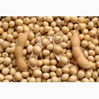 Закупівля сільськогосподарської продукції. Соя, кукурудза, пшениця, ріпак, соняш