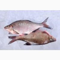Риба оптом Україна