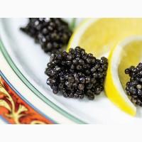 Черная Икра для еды.Стерляди(количество ограничено)