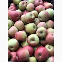 Продам яблоки, урожай 2020г