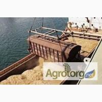 Пшеница 3 класса ГОСТ с поставкой в Египет