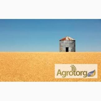 Купим пшеницу.(2-6 класса)