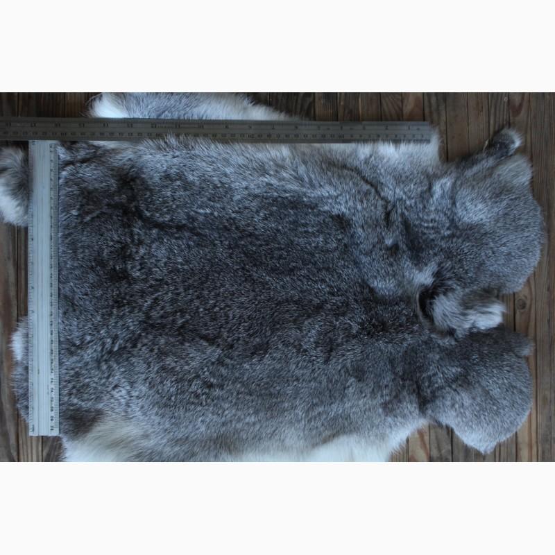 Фото 4. Шкуру кролика выделанную серую оптом продам