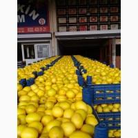 Продам лимон (Турція). Вигідна ціна за якісний товар